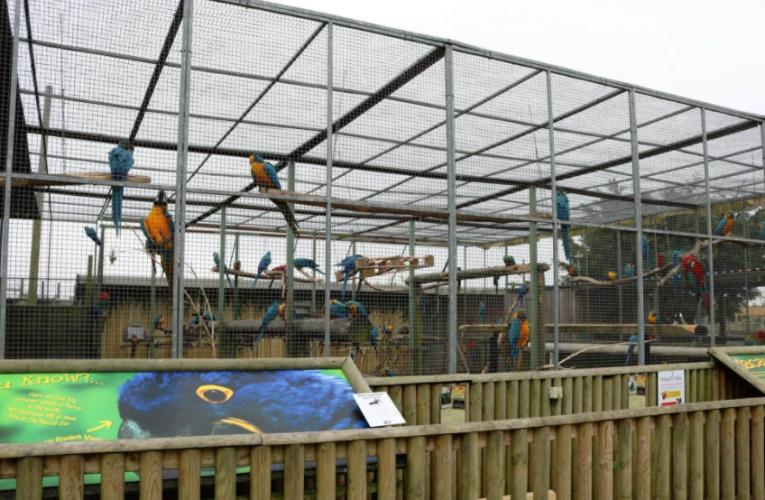 5 Ekor Burung Kakak Tua Terpaksa Dikuarantin Kerana Suka Carut Pengunjung Zoo