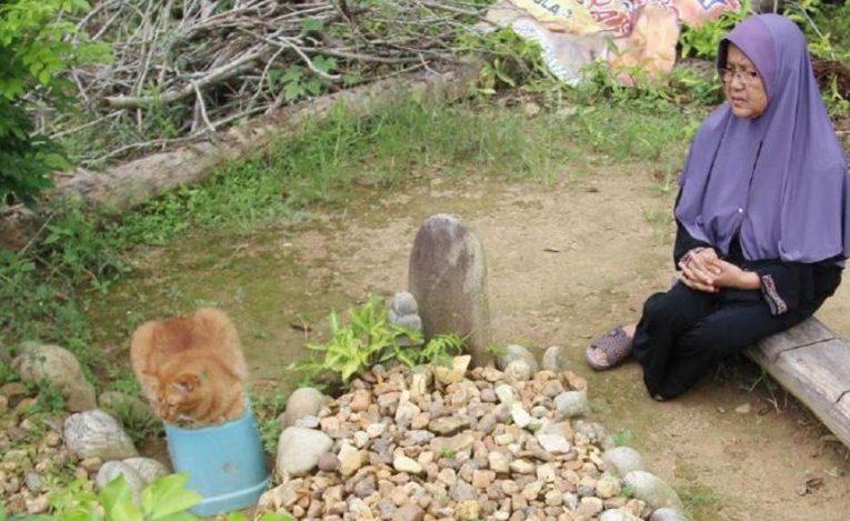 Kisah Si Nana, Kucing Oyen Yang Hampir Setiap Hari Lawat Pusara Tuannya