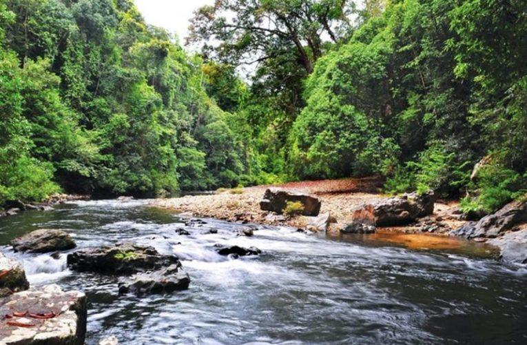 Taman Negara Di Pahang Dibuka Semula Hari Ini