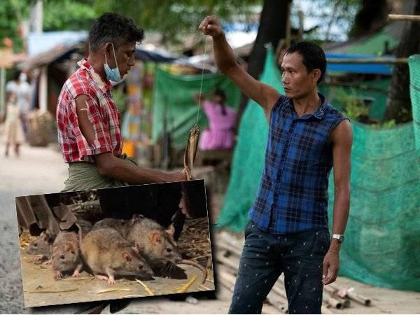 Demi Tak Nak Mati, Terpaksa Makan Tikus, Ular